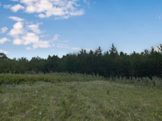 Photo 6: SW 17-44-09 W4: Land Only for sale (MD of Wainwright)  : MLS®# A1029195