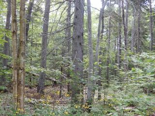 Photo 3: Pictou Landing Road in Pictou Landing: 108-Rural Pictou County Vacant Land for sale (Northern Region)  : MLS®# 202118664