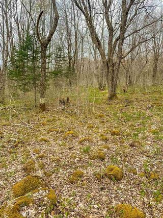 Photo 2: Lot Lester Getson Road in Wileville: 405-Lunenburg County Vacant Land for sale (South Shore)  : MLS®# 202110952