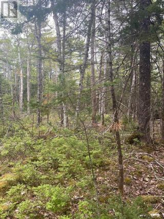 Photo 5: West Caledonia in Whiteburn Mines: Vacant Land for sale : MLS®# 202112919