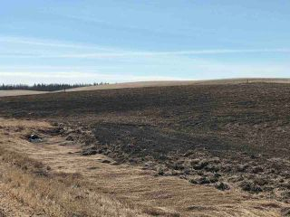 Photo 2: Twp 582 and RR 243: Rural Sturgeon County Rural Land/Vacant Lot for sale : MLS®# E4238327