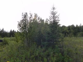 Photo 13: 22084 PT 2 PARCEL, WHITMORE RD in FORT FRANCES: Vacant Land for sale : MLS®# TB212402