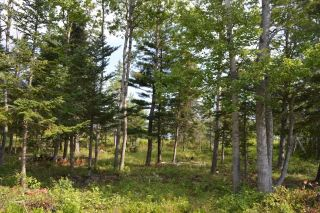 Photo 7: Lot 2 Highway 6 in Wallace: 102N-North Of Hwy 104 Vacant Land for sale (Northern Region)  : MLS®# 201913174