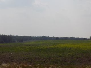 Photo 28: 50266 HWY 21: Rural Leduc County House for sale : MLS®# E4256893