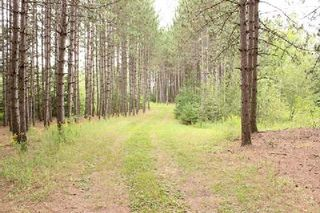 Photo 3: Lt 2 Hwy 121 in Kawartha Lakes: Rural Somerville Property for sale : MLS®# X2986227