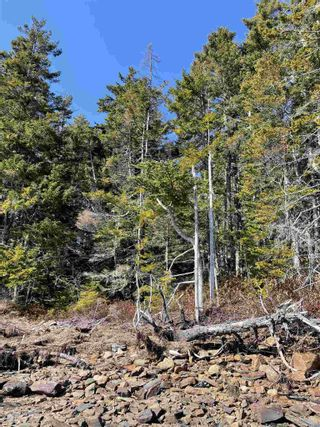 Photo 7: Highway 332 in Bayport: 405-Lunenburg County Vacant Land for sale (South Shore)  : MLS®# 202118989