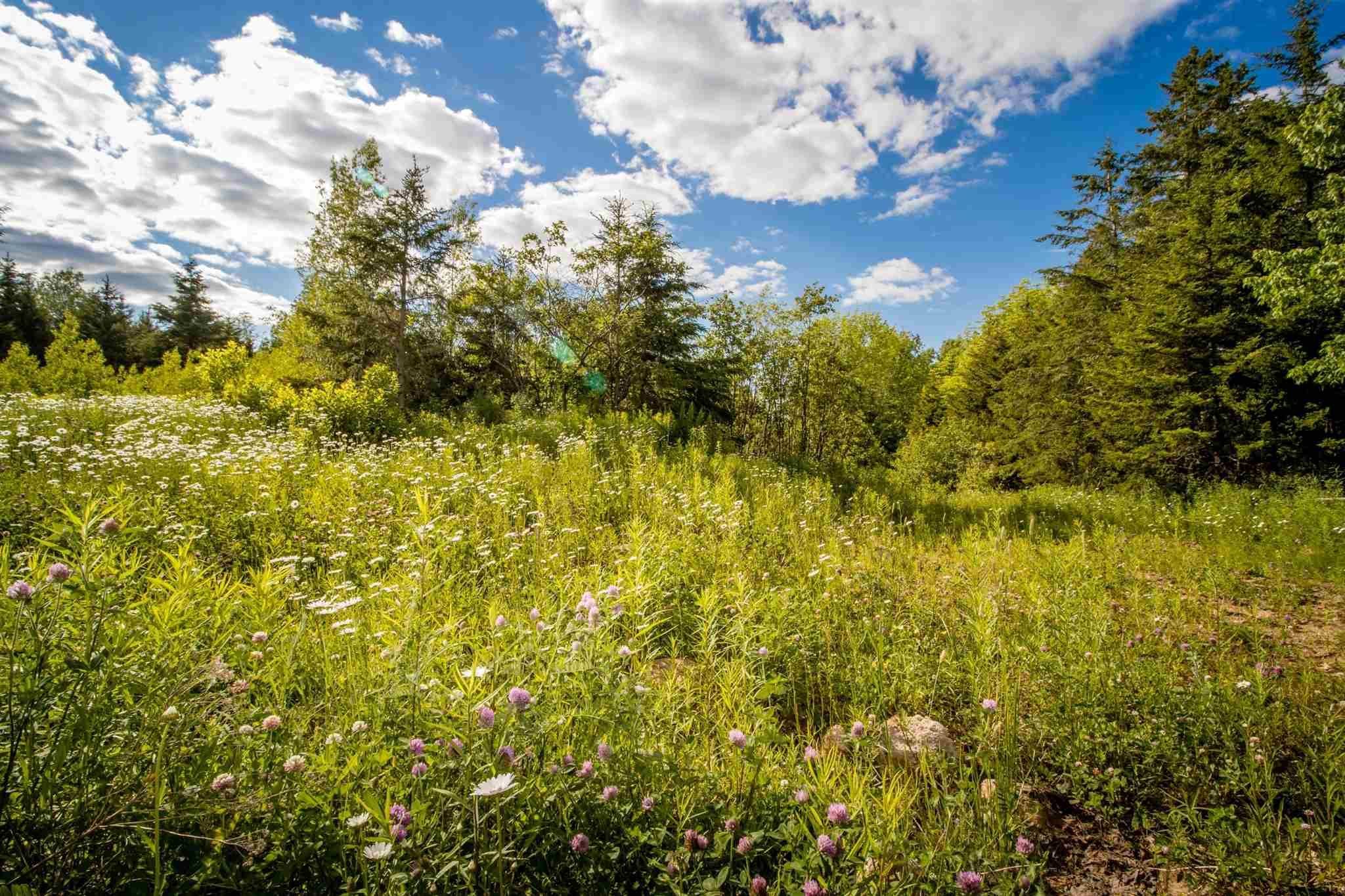 Main Photo: Lot A1 Aylesford Road in Lake Paul: 404-Kings County Vacant Land for sale (Annapolis Valley)  : MLS®# 202115389