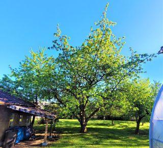 Photo 30: 6284 Cherry creek Rd in : PA Alberni Valley House for sale (Port Alberni)  : MLS®# 875886