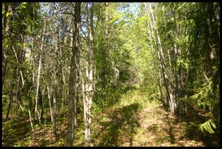 Photo 17: 21 6500 Southwest 15 Avenue in Salmon Arm: Panorama Ranch Vacant Land for sale : MLS®# 10230290