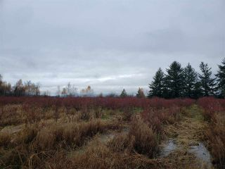 Photo 20: Blueberry Farm FORD RD, Pitt Meadows in Pitt Meadows: West Meadows House for sale : MLS®# R2519795