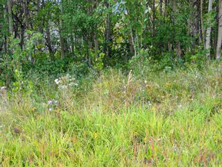 Photo 3: 24180 Meadow Drive in Rural Rocky View County: Rural Rocky View MD Residential Land for sale : MLS®# A1098296